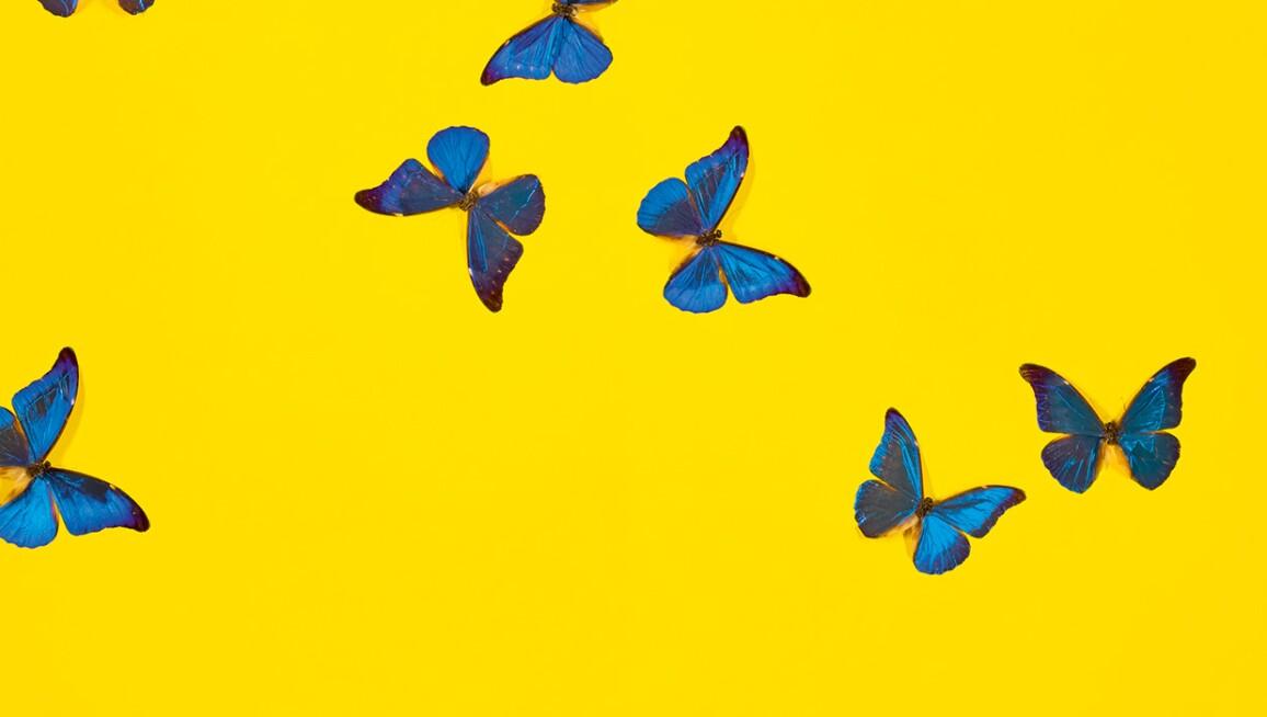 yellowball-banner.jpg