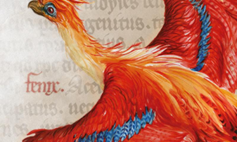 Harry Potter Phoenix
