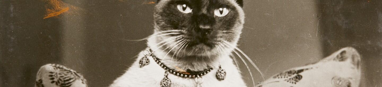 l17148-cats-banner2.jpg