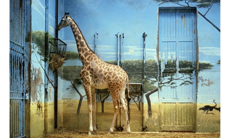 Candida Höfer Zoologischer Garten Paris II, 1997 26 x 37 cm © Candida Höfer, Bildrecht Wien, 2017.jpg