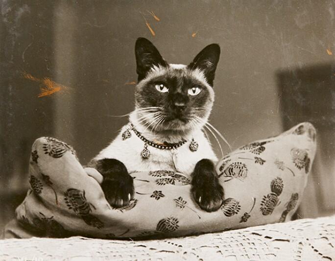 l17148-cats-blog-3.jpg