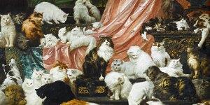 catsvideostill-640x360.jpg