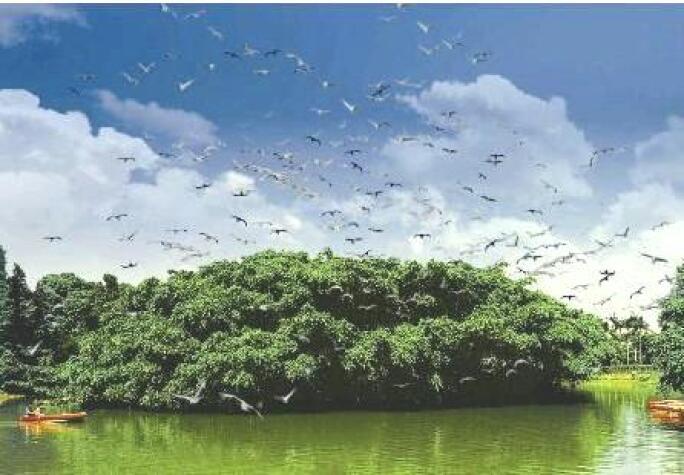 Bird Paradise in Xinhui.jpg