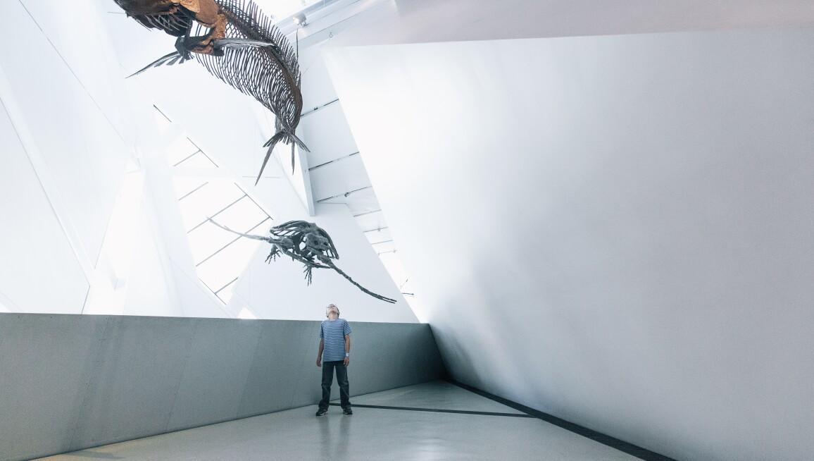 Interior View, Royal Ontario Museum