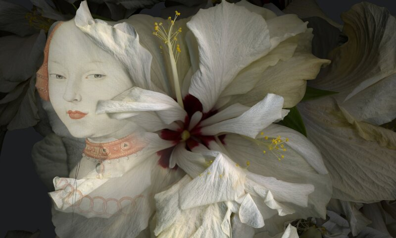 White Hibiscus, Spring Song